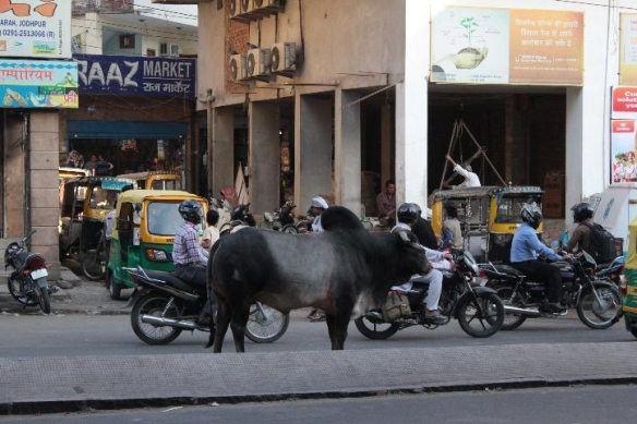 Ein zunächst ungewohnter, aber sehr häufiger Anblick im Straßenverkehr
